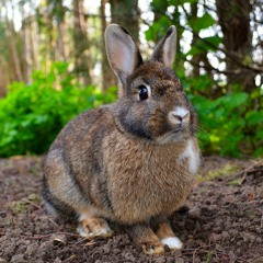 Rabbit (Remix)