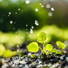 FAO Podcast - Plant health key to safeguarding food