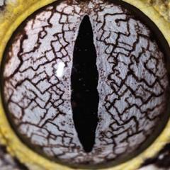 Oculi Serpentum  - - -  - - -   ANTIMATERIA     166bpm  16bit  0db