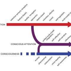 Conscious Attention