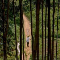 Podcast de la FAO - Mieux reconstruire après le COVID-19 avec l'aide des forêts