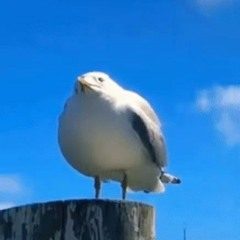 you're a seagull at the beach and you just stole someones french fry