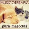Musica para Gatos para Relajarse y Dormir