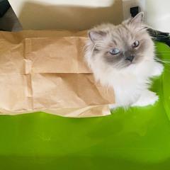 cat's outta the bag