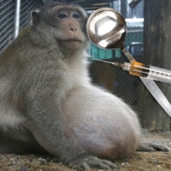 Shooting Heroin with a Monkey