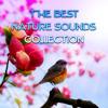 Folk Music (Soothing Waves Sound)