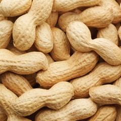 Nuts [prod. by JasonDaMason]