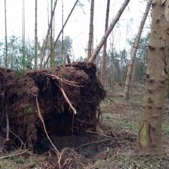 Wind & Wood - 2020/02/15 - Oldehave, Ostfriesland