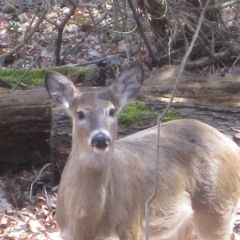 Deer Donation Program In Its First Year In Saint Andrews