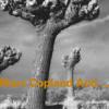 Old Friends 3 (feat. Michael Brecker, John Abercrombie, Drew Gress & Jochen Rueckert)
