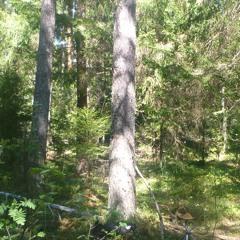 Im Tiefen Walde