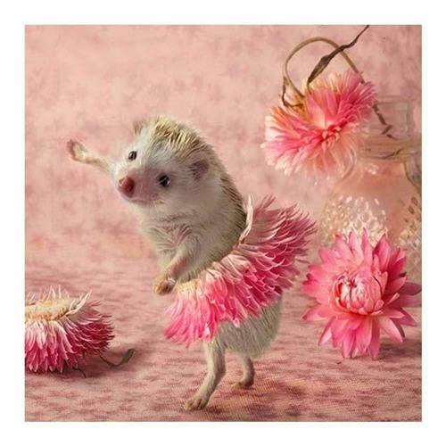 Stacherlig (One Night In A Hedgehog's Life)