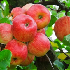 ADDBIBLE® Proverbs 14 - The Fruit of Our Ways