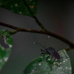 Amazon rainforest - calm night