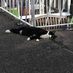 Cat Sleeping #2