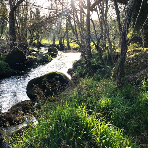 Teign Near Rushford Mill 3 April 2020