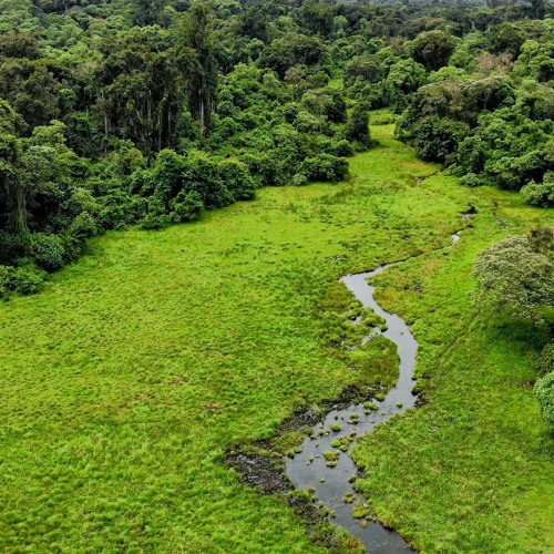 Ethiopian Cloud Forest - Dawn Chorus With Hornbills And Colobus Monkeys