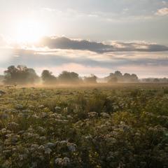 Westhay Dawn Chorus - Somerset, UK