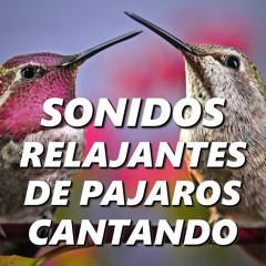 Canciones de Aves