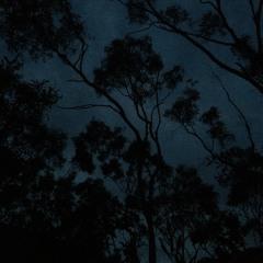 Dawns of Deep Creek: A Seasonal Study