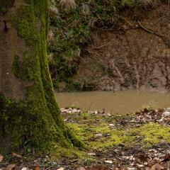British Woodland On Spring Morning