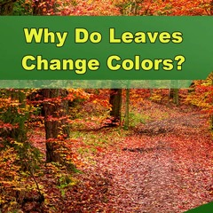 Why Do Leaves Change Colors? - Episode 266