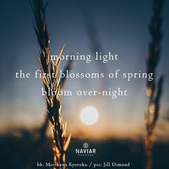 Spring bloom [naviarhaiku367]