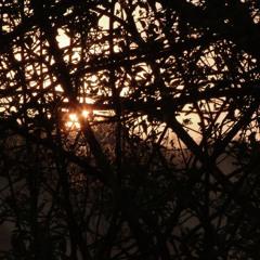 26 march 2020 northern homestead dawn chorus