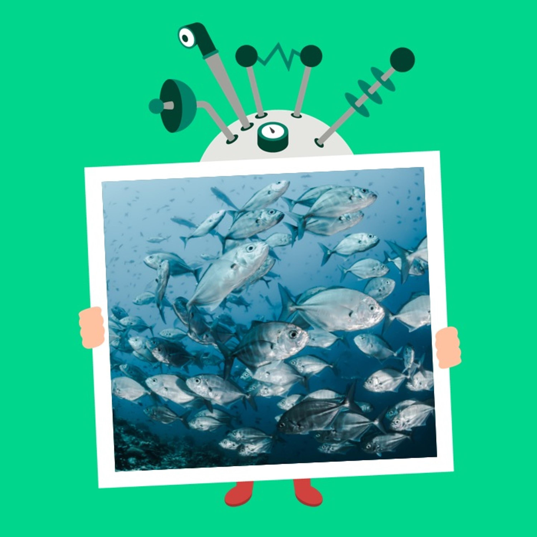 Afsnit 44: Hvordan trækker fisk vejret?