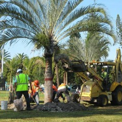 Palm Tree Trimming Services In Sarasota