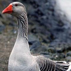 Grey Goose Mix And Blend!!