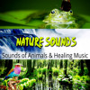Water Sounds (Natural Calm)