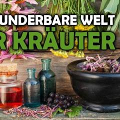 Die wunderbare Welt der Kräuter - Maiga Werner