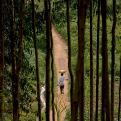 FAO Podcast - COVID-19:  Building back better with forests