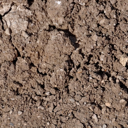 Claudia Molitor Sonic Soil