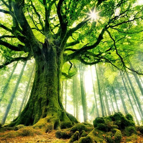MÉDITATION • Méditation de l'arbre (Ancrage et enracinement)
