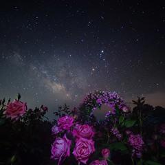 Stars and Roses(Prod. TheDisfiguredSpirit)