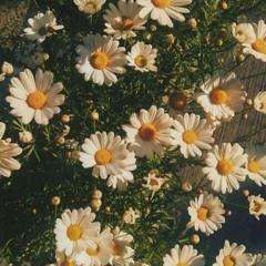 Daisy (feat. AIKA)