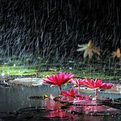 Froggy Rain