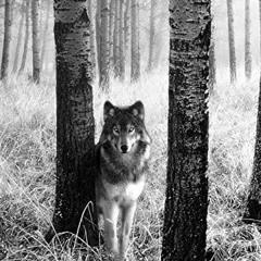 Woods (prod. by ClassE Beats)