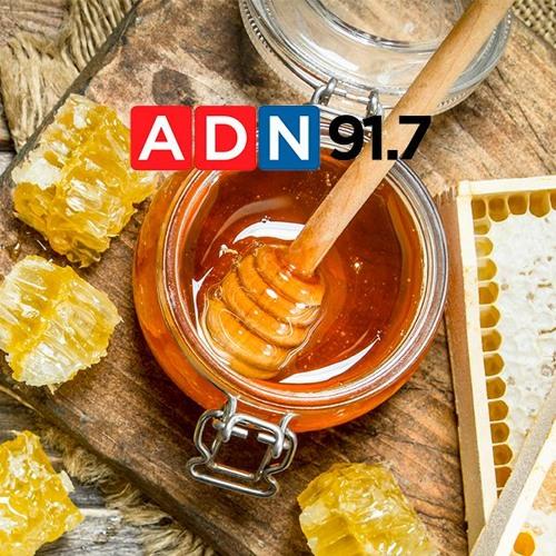 """Entrevista Radio ADN - """"Consumo per cápita de miel aumentó en 600 grs."""""""