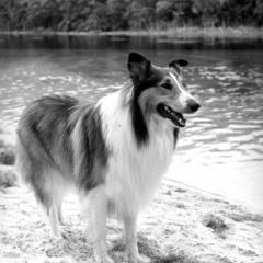 Kozie's Corner:  Lassie