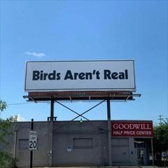 CyberForest - BirdsArentReal