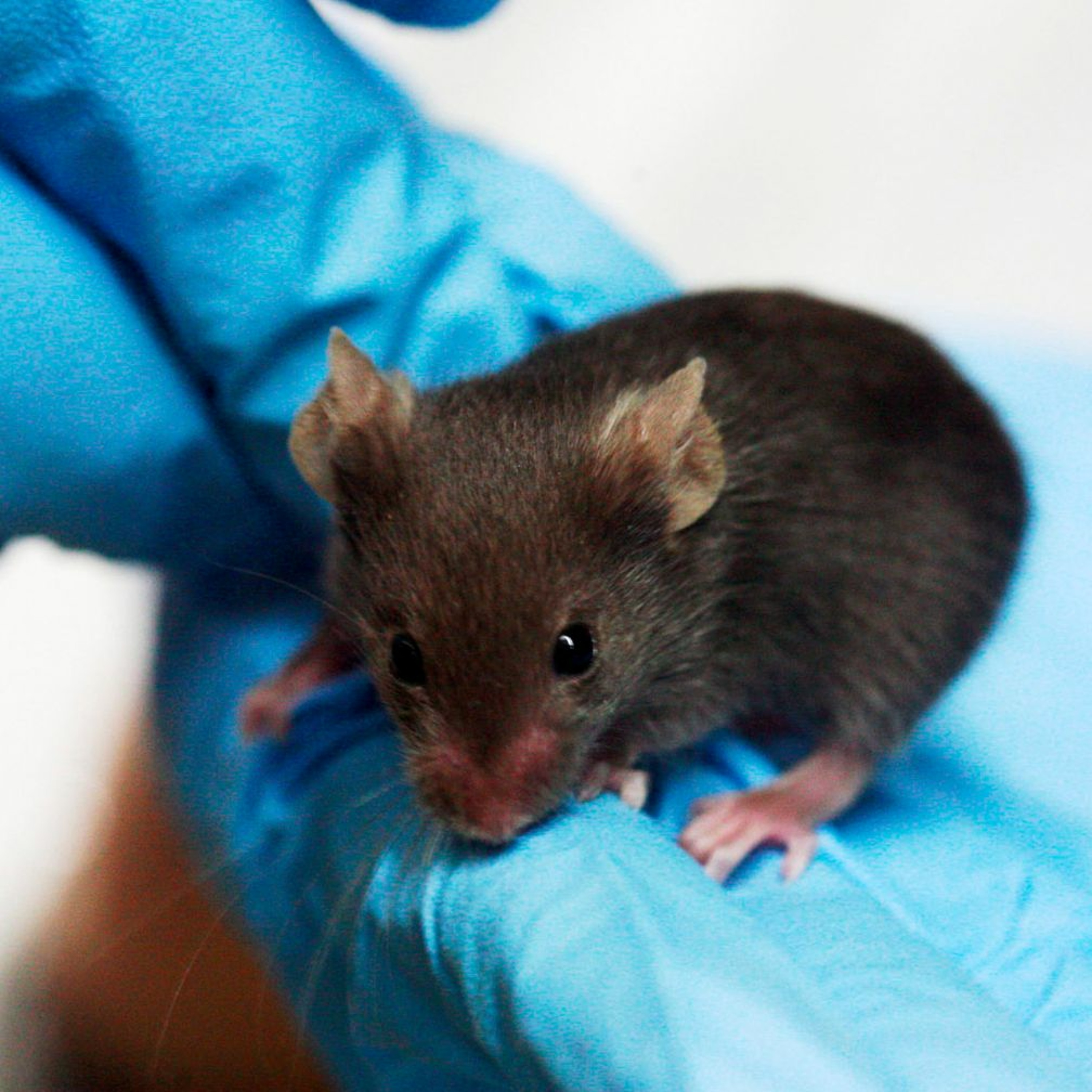 Ep. 47: The Toll of the Culture of Silence in Animal Research