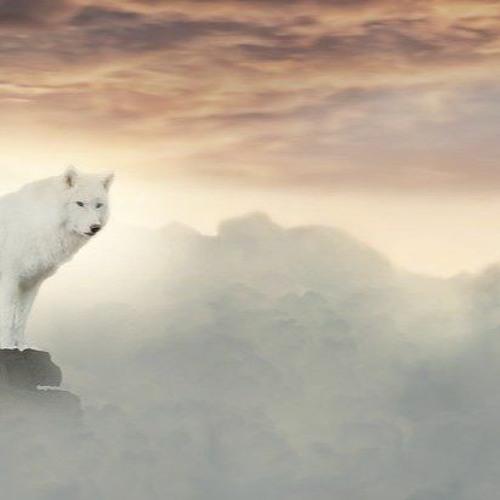 Iulian Iacob Wolf