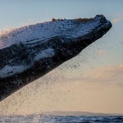 Geronymo - The Whales (Original Mix)