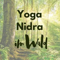 Yoga Nidra Im Wald