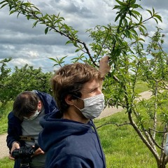 Gel : 100% de la production arboricole détruite à Irigny