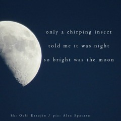 Only A Chirping Insect ( Naviarhaiku 363 )
