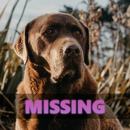 Missing (by Nina Schuyler)